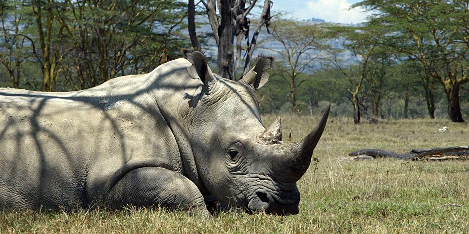 Wilderei In Afrika