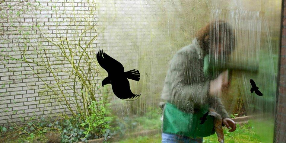 Nabu Broschüre Für Vogelschutzglas Trotz Unwirksamkeit