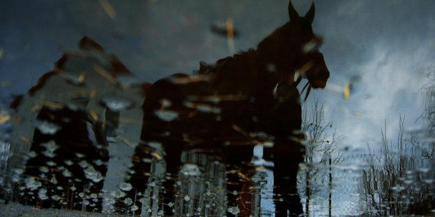 Ein trojanisches Pferd durch eine mit Regentropfen benetzte Scheibe gesehen