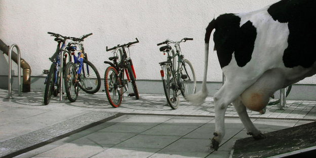 a cow runs on a ramp in the background  bicycles