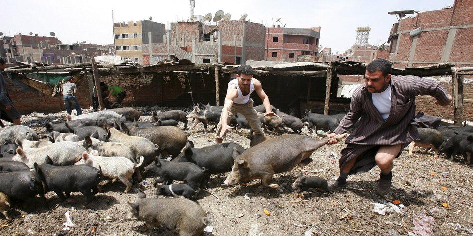 Schweinegrippe Tote