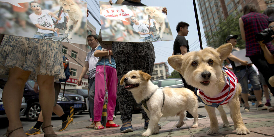 Hunde Als Delikatesse In China Kritik An Barbarischem Event Tazde