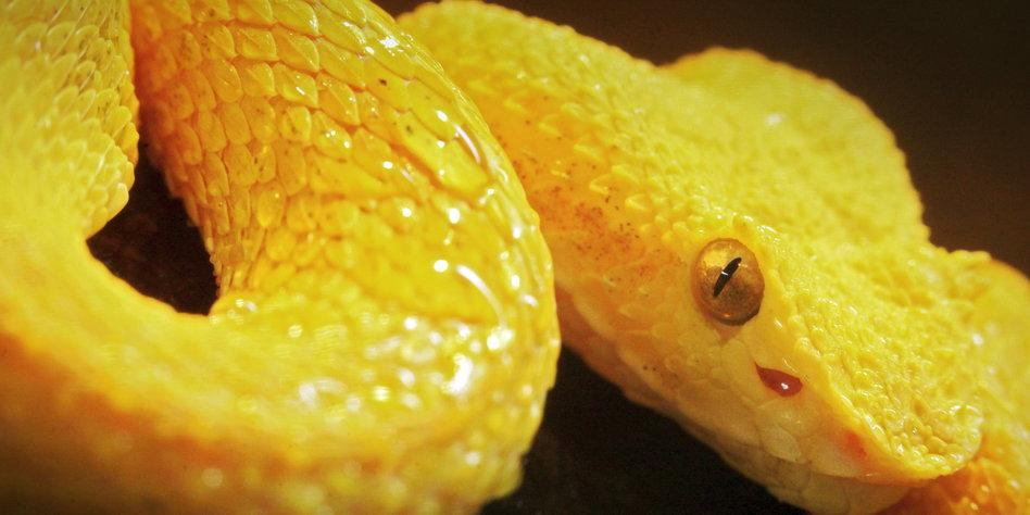 Gelbe Bilder gelbe stunning groe gelbe basic with gelbe bkw inge bttger
