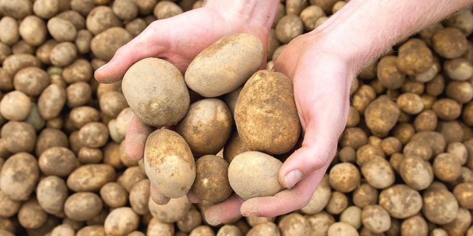 kartoffeln luft flecken