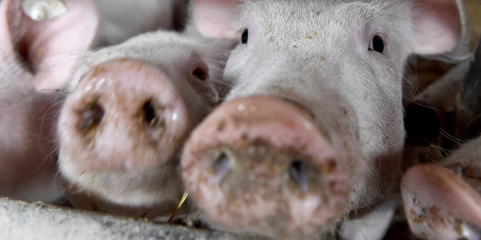 """Ethiker zu tierleidfreier Ernährung: """"Menschen dürfen"""