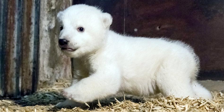 Name Für Berliner Eisbärbaby Der Junge Fritz Tazde