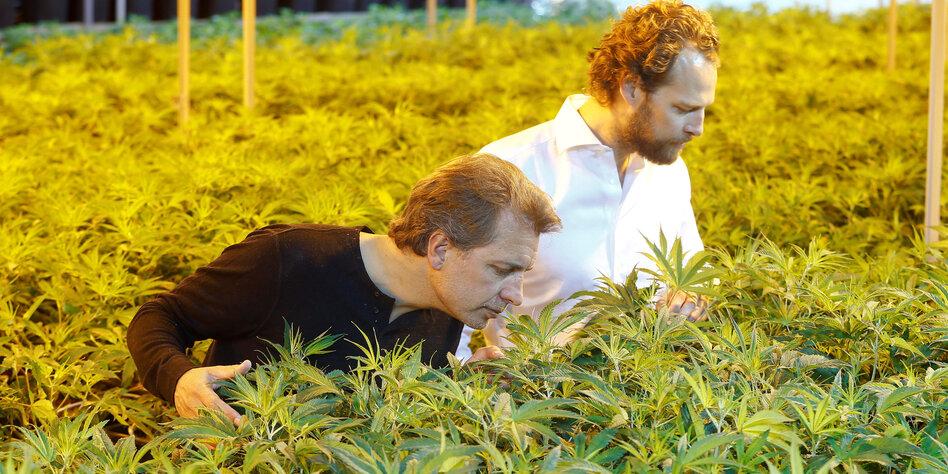 legalisierung von cannabis gras riecht jetzt nach geld. Black Bedroom Furniture Sets. Home Design Ideas