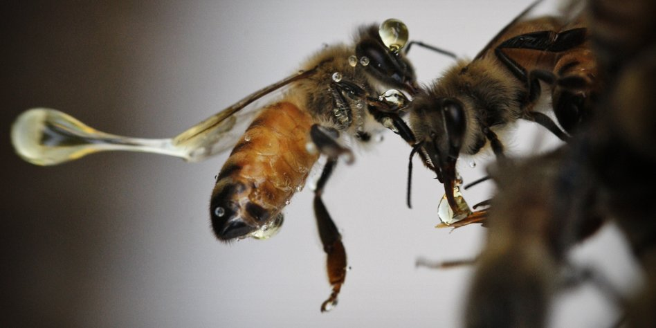omega 3 gegen artensterben bienen bekommen ihr fett weg. Black Bedroom Furniture Sets. Home Design Ideas