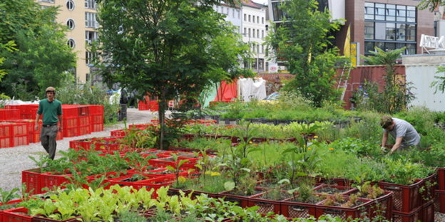 urban farming auf hochh usern tomaten vom dach. Black Bedroom Furniture Sets. Home Design Ideas