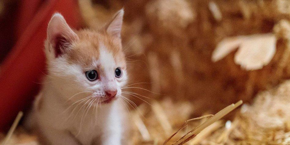 Studie Zu Von Der Mutter Getrennte Katzen Vom Baby Zum Randalierer
