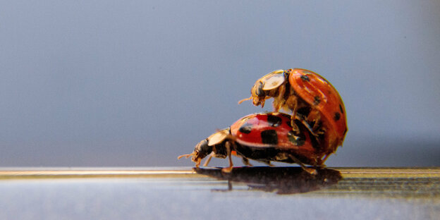 17101803_insekten_dpa.jpeg