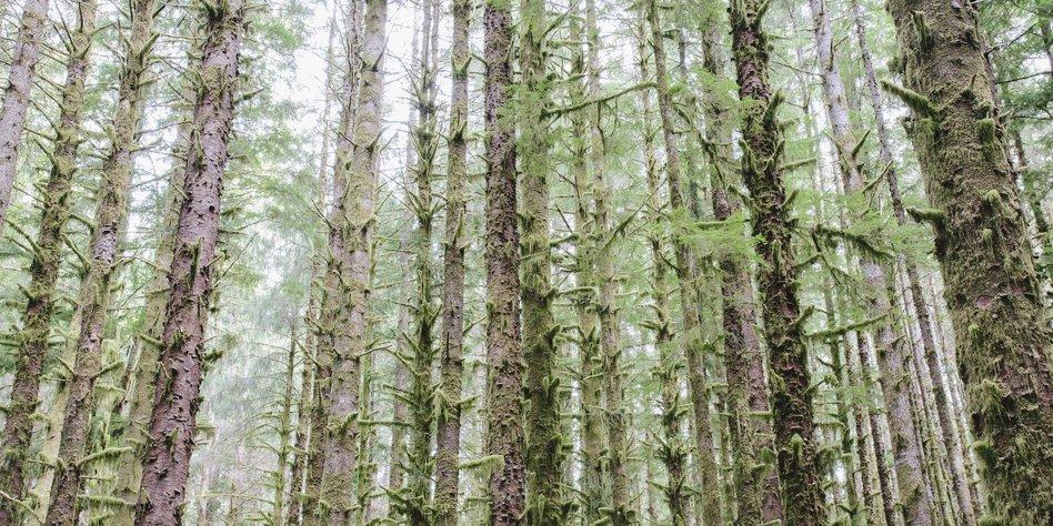 Fabelhaft Monokultur auf der grünen Insel: Irlands fiese Fichten - taz.de &DV_23
