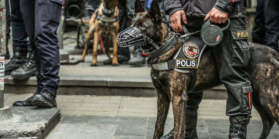 Nahaufnahme von einem Polizeihund mit Maulkorb