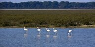 Flamingos im Nationalpark Donana