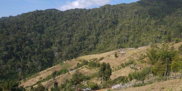 Waldgebiet am Hang, dazwischen Häuser