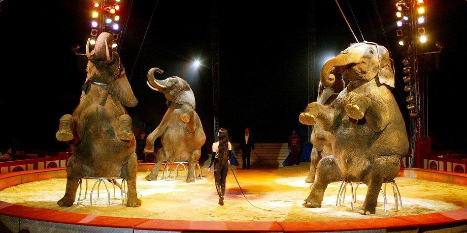 zirkusse ohne tiere