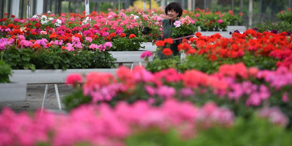 So Geht Nachhaltige Balkonbepflanzung Bleib Mir Bloss Weg Mit