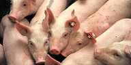 Nutztierhaltung in Deutschland: Lasst die Sau raus!
