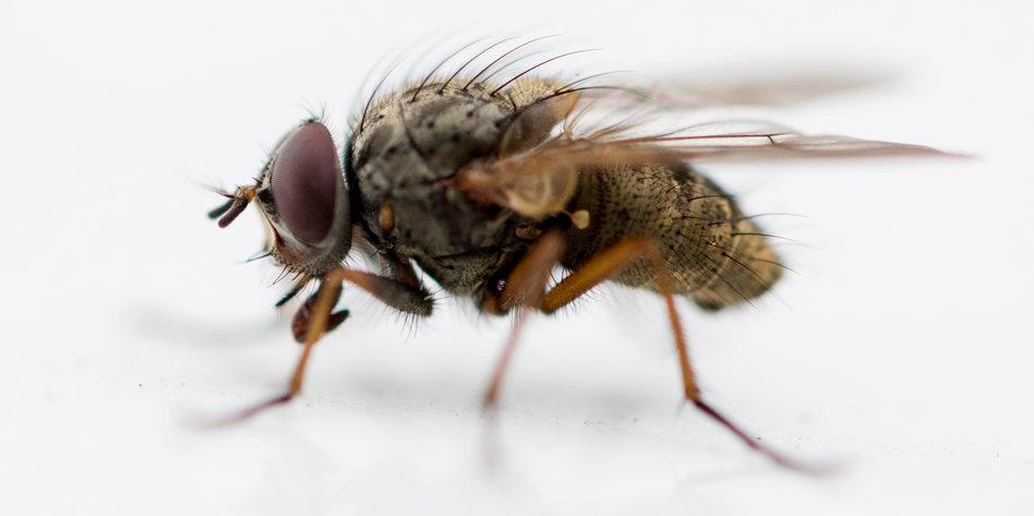 petition der woche eine stadt k mpft mit den fliegen. Black Bedroom Furniture Sets. Home Design Ideas