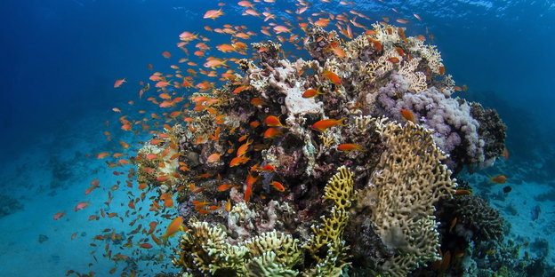 Fische am Great Barrier Reef
