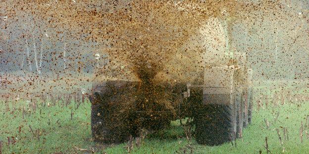 Ein Trecker bringt Gülle auf einem Maisfeld aus
