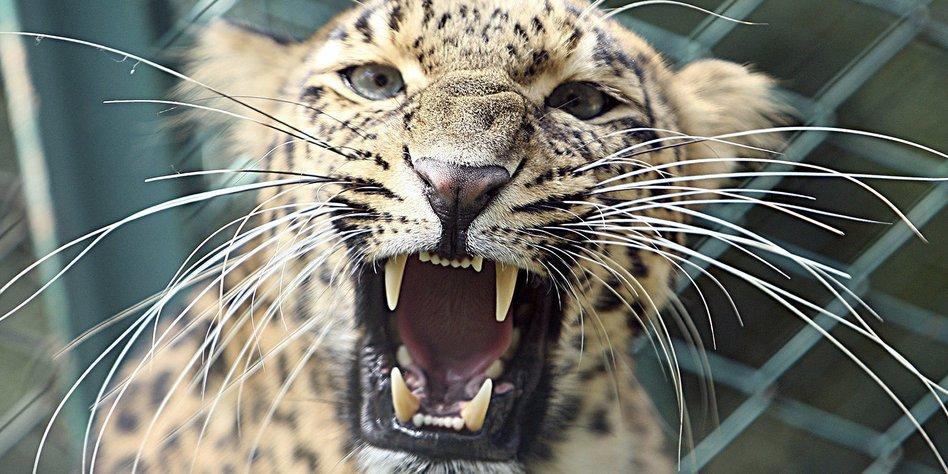 Kolumne Wirtschaftsweisen Mit Leoparden Im Hinterhof Taz De