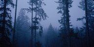 Konflikt um das Raubtier im Schwarzwald: Der Wolf und die 21 Ziegen