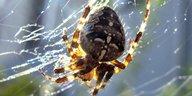 Die Wahrheit: Spinnerte Spinnen