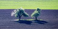 Naturschutz in Bayern: Wie die CSU den Flächenfraß anheizt