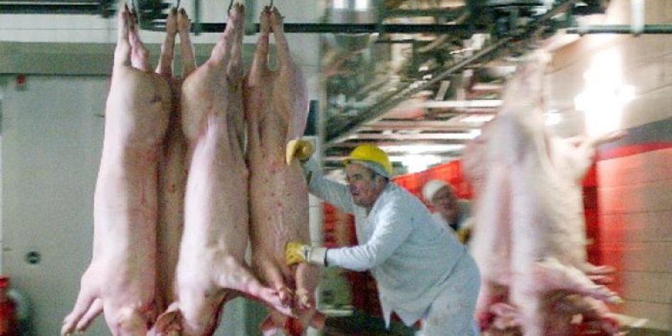 schweinehälften online kaufen