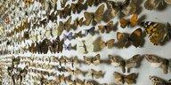 Wissen um bedrohte Arten: Expeditionen ins eigene Archiv