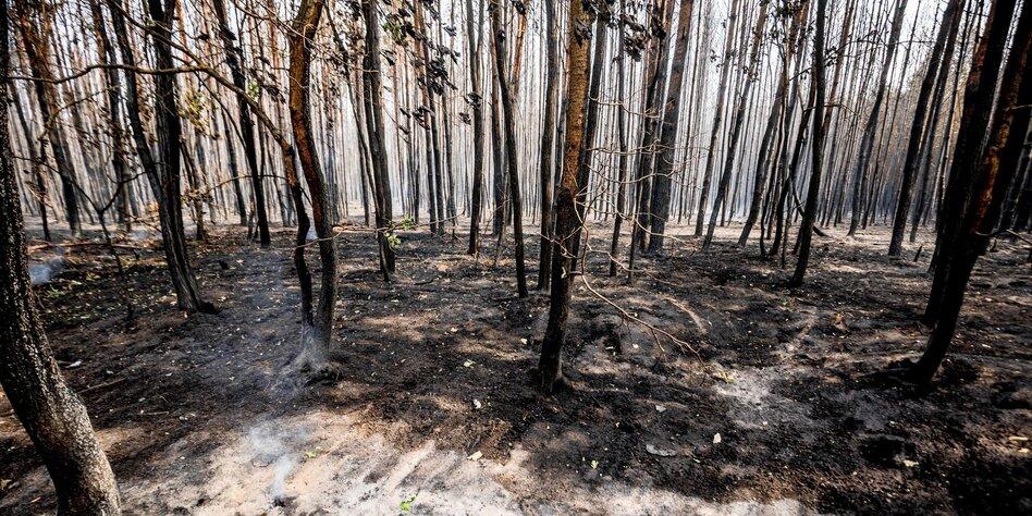 Etwas Neues genug Kommentar Forstbrand in Brandenburg: Eine Chance für den Waldumbau &UH_88