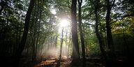 Chronik der Hambacher-Forst-Räumung: Das Schreien im Walde