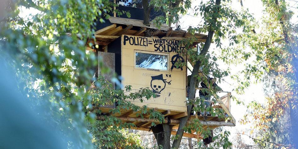 Hambacher Forst: Rodungsstopp verfügt