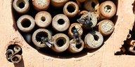 Schutz von Insekten: Sie sind systemrelevant