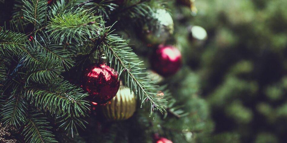 Ökologische Weihnachtsbäume: Wer jetzt kein' Baum hat …