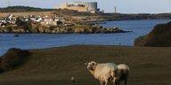 Britische AKW-Projekte scheitern: Nun auch noch Atom-Brexit
