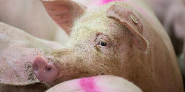 Mehr Klarheit beim Fleischkauf? Wenig Klarheit durch schlampigen Journalismus.