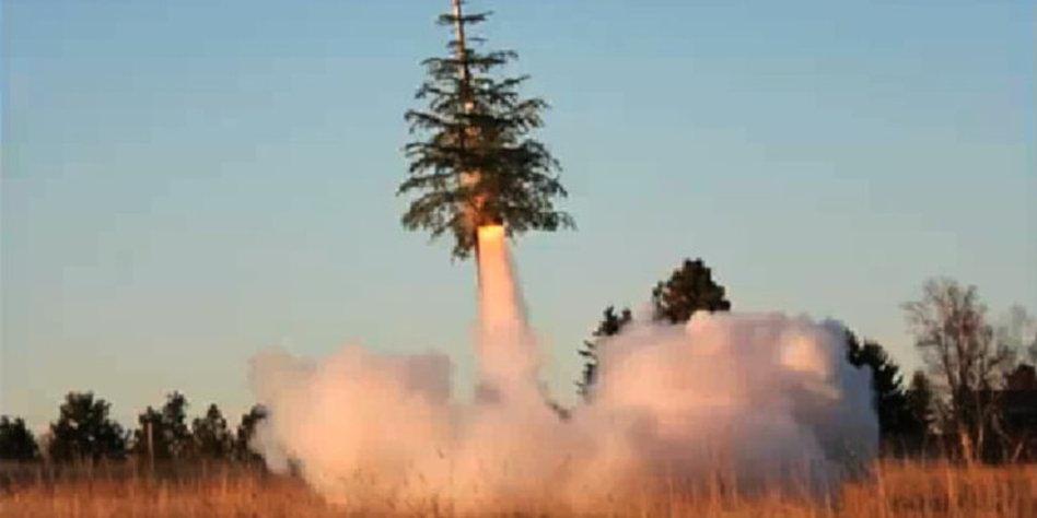 video der woche rasant entsorgter weihnachtsbaum. Black Bedroom Furniture Sets. Home Design Ideas