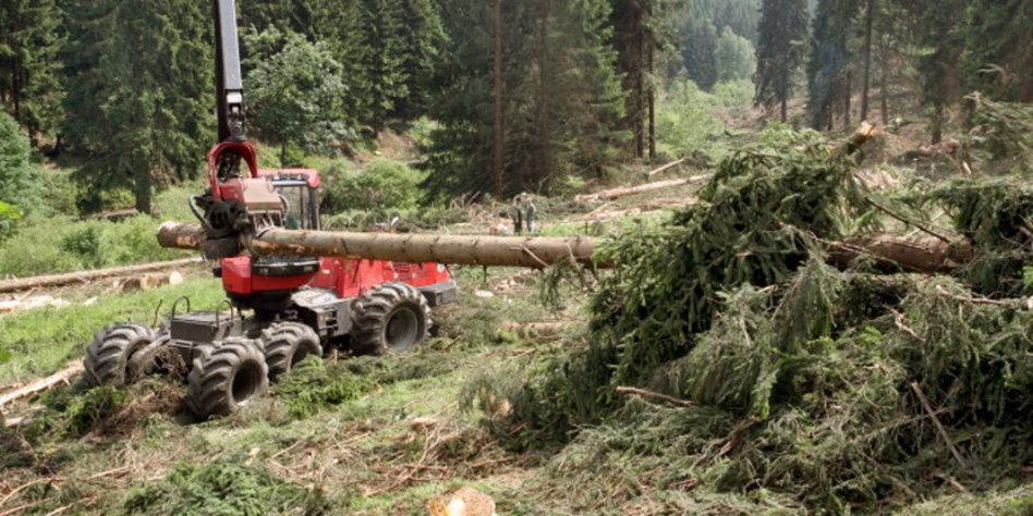 Waldrodung In Deutschland