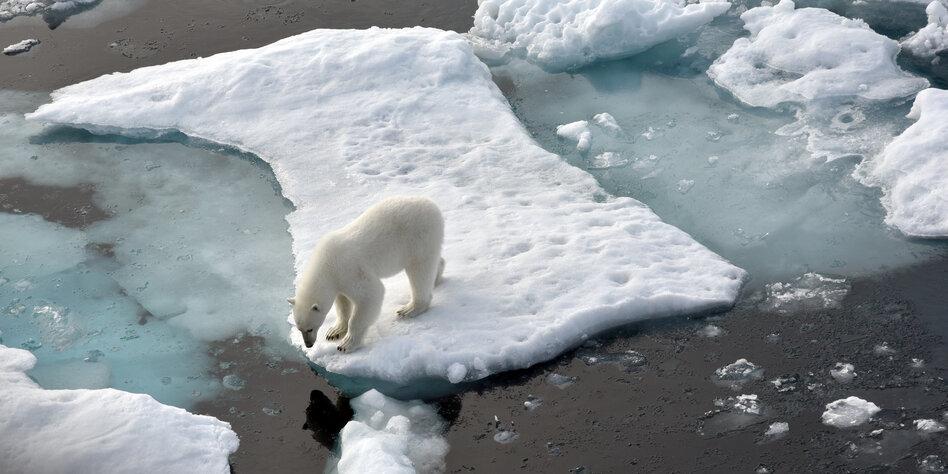 Was Passiert Wenn Die Arktis Schmilzt