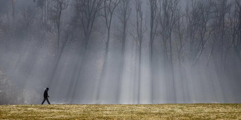 Baumsterben In Deutschland Schwere Schaden Im Wald Taz De