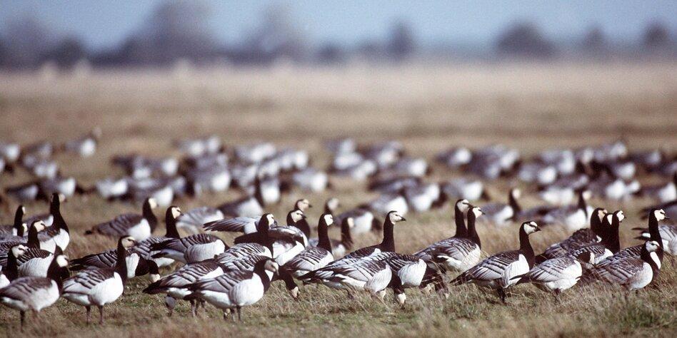 Petition gegen Ferien im Vogel-Koog