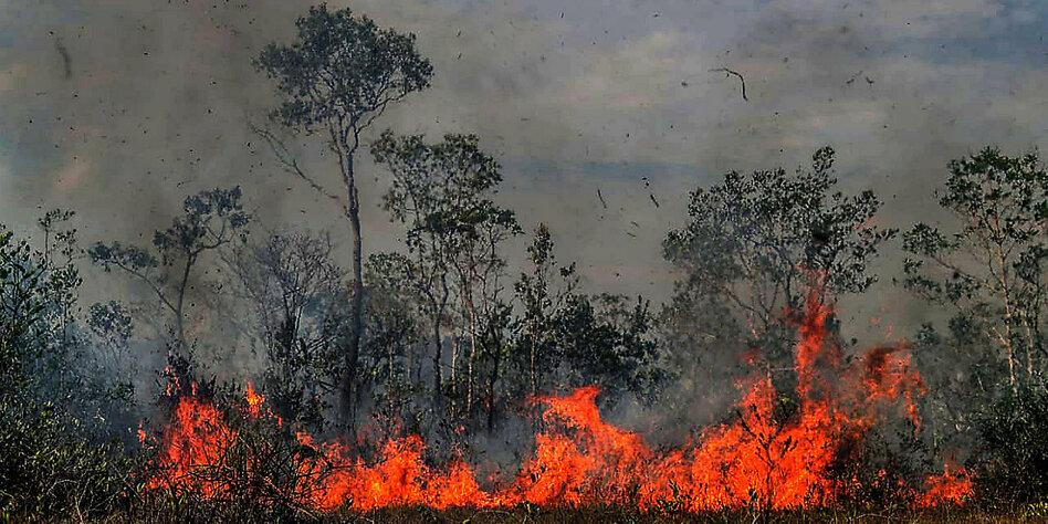 brände amazonas