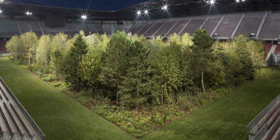 Aufsehenerregende Kunstaktion Baume Als Golden Goal Taz De