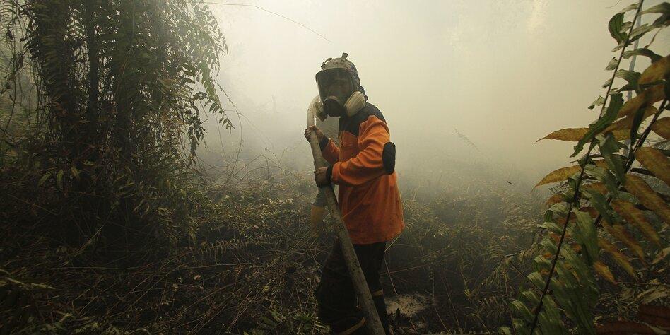 Regenwälder gehen in Rauch auf