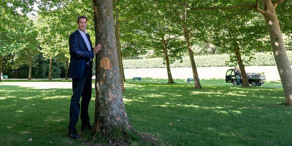 Pose mit Baum