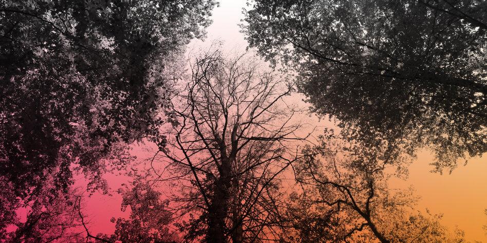 Superbäume gesucht
