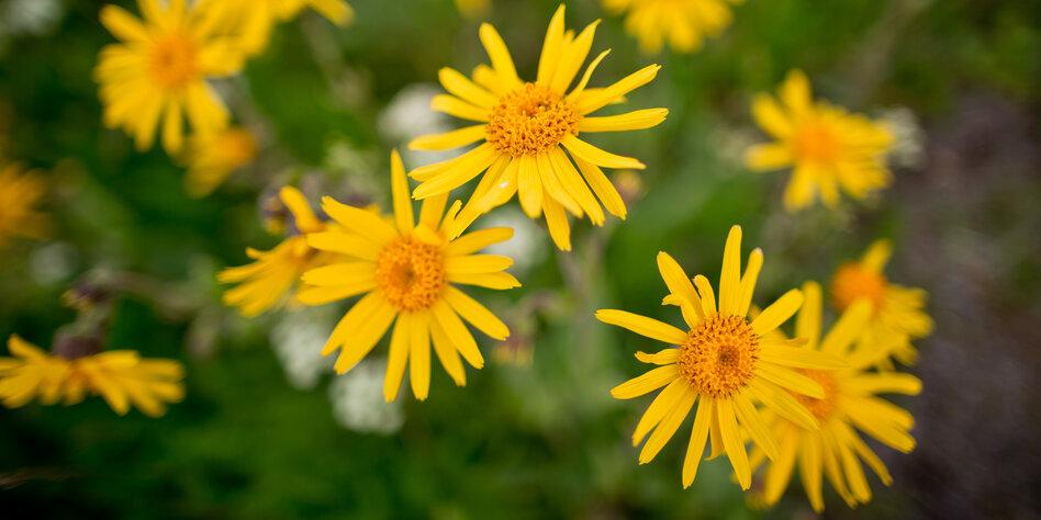 Homöopathie-Gegner helfen Spahn