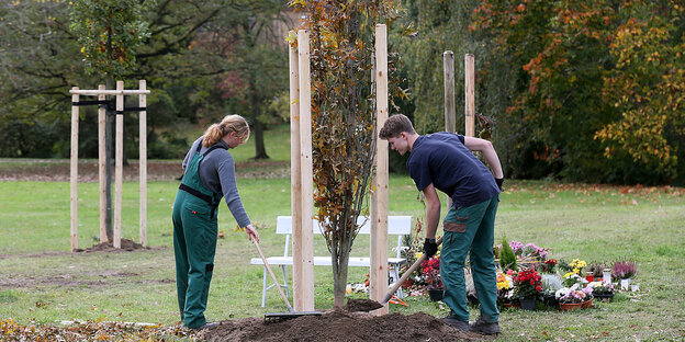 Two people are planting a tree
